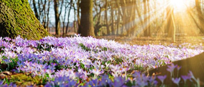 Март. Весна в Инстаграм